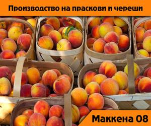 Маккена 08 ООД