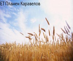 ЕТ Пламен Каравелов