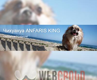 "Развъдник за родословни чихуахуа ""Anfaris King"""