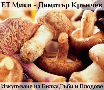ЕТ Мики - Димитър Крънчев