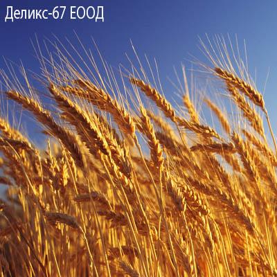 Деликс - 67 ЕООД