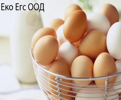 Еко Егс ООД