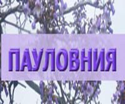 Пауловния - Георги Сейков
