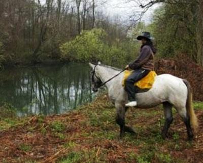 Перегринус 2000 | Езда - Клуб по конен спорт и туризъм - Синеморец